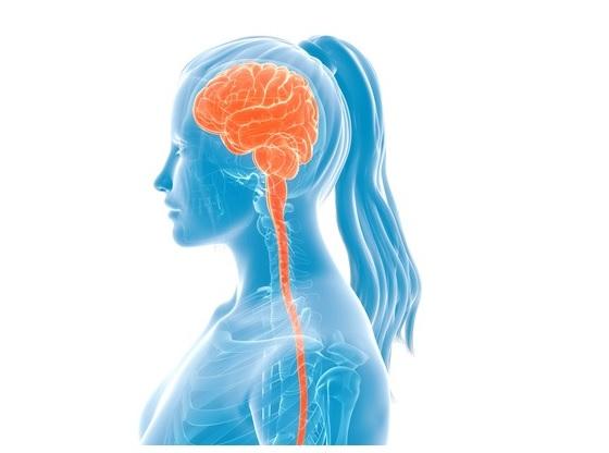 須賀川整体院、脳脊髄液