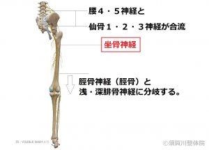須賀川整体院、坐骨神経痛治療