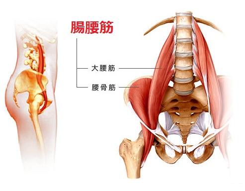 須賀川整体院、腸腰筋