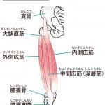 【大腿四頭筋】の須賀川整体院式ストレッチ