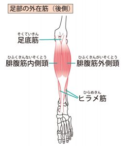 須賀川整体院、腓腹筋・ヒラメ筋・足底筋