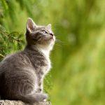 猫背の原因になっているつながりはなにか!?~体のつながりPART1