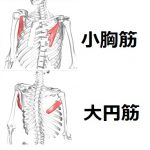 小胸筋&大円筋☆ストレッチ