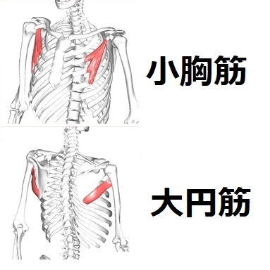 須賀川整体院、小胸筋・大円筋