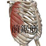 前鋸筋の症状とセルフケアについて